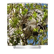 Wasps' Nest Shower Curtain