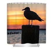 Watch The Birdie Shower Curtain