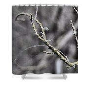 Watcher In The Woods Shower Curtain