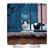 Watchful Cat, Mexico Shower Curtain