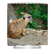 Watchful Meerkat Shower Curtain