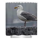 Watchful Seagull Shower Curtain