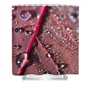 Water And Leaf Shower Curtain