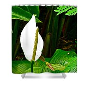 Water Arum In Park Across From Wat Phrathat Doi Suthep In Chiang Mai-thailand. Shower Curtain