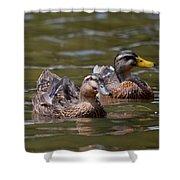 Water Buddies - Female Mallards Shower Curtain