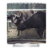 Water Buffalo - 2 Shower Curtain