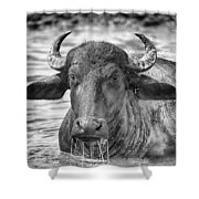 Water Buffalo-black And White Shower Curtain