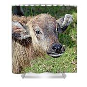 Water Buffalo Calf Shower Curtain