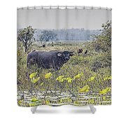 Water Buffaloes At Corroboree Billabong Shower Curtain