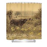 Water Buffaloes At Corroboree Billabong V2 Shower Curtain