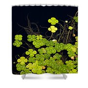 Water Clover Shower Curtain