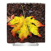 Water Colored Leaf - Autumn Shower Curtain