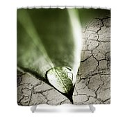 Water Drop On Green Leaf Shower Curtain