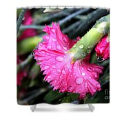 Water Droplets On Carnations Shower Curtain by Janice Byer