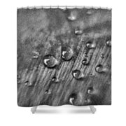 Water Drops Shower Curtain