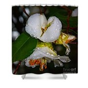 Water Drops Galore  Shower Curtain