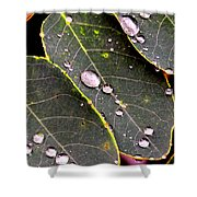 Water Drops Leaves Shower Curtain