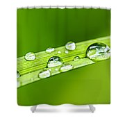 Water Drops On Grass Blade Shower Curtain by Elena Elisseeva