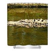 Water Gator Shower Curtain