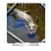 Water Hole Gator Shower Curtain