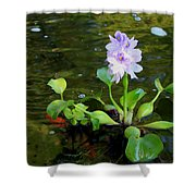 Water Hyacinth Float Shower Curtain