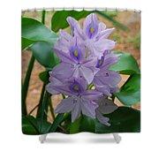 Water Hyacinth Shower Curtain