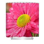 Water Kissed Pink Chrysanthemum 2 Shower Curtain