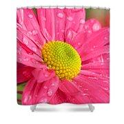 Water Kissed Pink Chrysanthemum  Shower Curtain