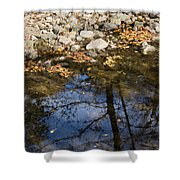 Water Leaves Stones And Branches Shower Curtain