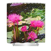Water Lilies 009 Shower Curtain