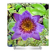Water Lilies 12 Shower Curtain