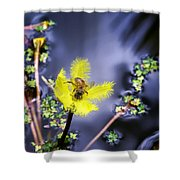 Water Lilies 29 Shower Curtain