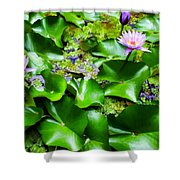 Water Lilies 31 Shower Curtain