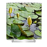 Water Lilies Aligned Shower Curtain