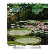 Water Lilies And Platters And Lotus Leaves Shower Curtain
