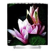 Water Lilies IIi Shower Curtain