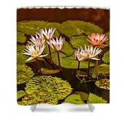 Water Lilies Img_6388 Shower Curtain