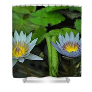 Water Lilies  1 Shower Curtain