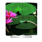 Water Lillies In Pink Shower Curtain