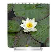 Water Lily - White Shower Curtain