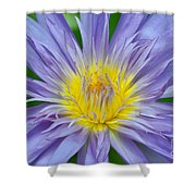 Water Lily 16 Shower Curtain