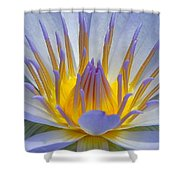 Water Lily 18 Shower Curtain