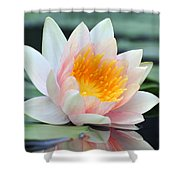 water lily 45 Water Lily with Reflection Shower Curtain