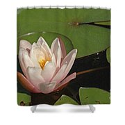 Water Lily 5 Shower Curtain
