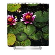Water Lily Acanthius Shower Curtain