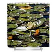 Water Lily And Bees Shower Curtain