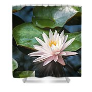 Water Lily And Lily Pads Shower Curtain