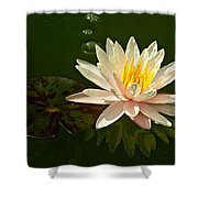 Water Lily And Pad Shower Curtain