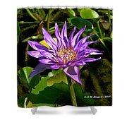 Water Lily Bloom Shower Curtain
