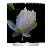 Water Lily Blossom In Shadows Shower Curtain